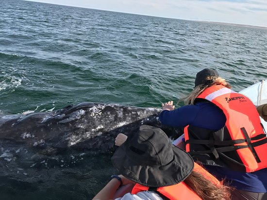 Baja whale petting. The whales come right up to the boat and want to be touched. Amazing.