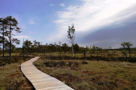 Bog Walk in de provincie Pärnu