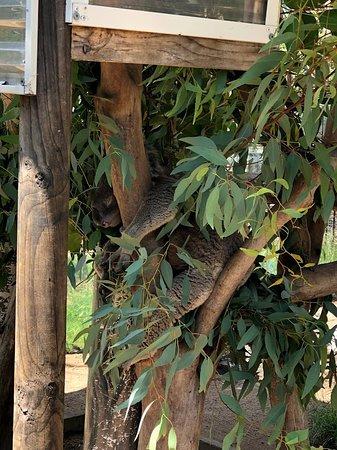 Calga, Australia: Native Australian birds and animal wildlife sanctuary. Entrance fee includes walks to Aboriginal sites.  All self-guided.  Naturalists were kind and helpful.