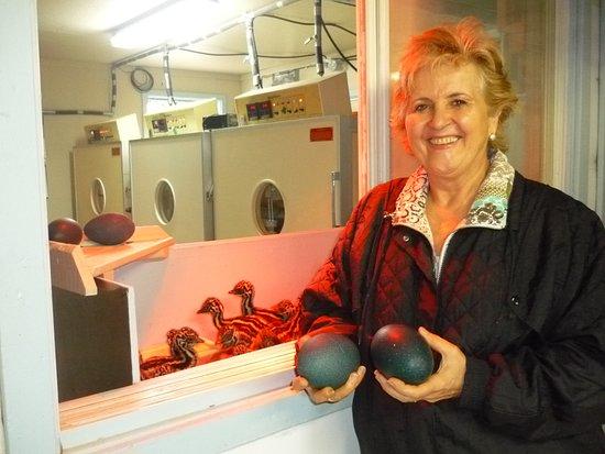 Saint Urbain, Канада: Incubation d'oeufs d'émeu avec poussins