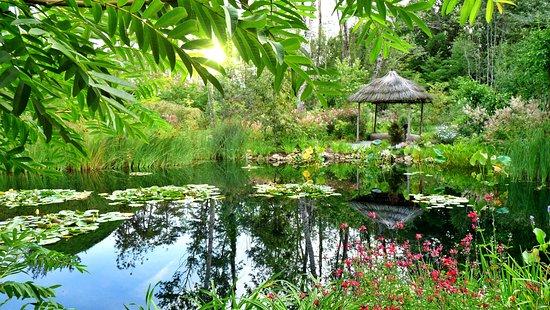 Frankrijk: Reflection in the pond, France