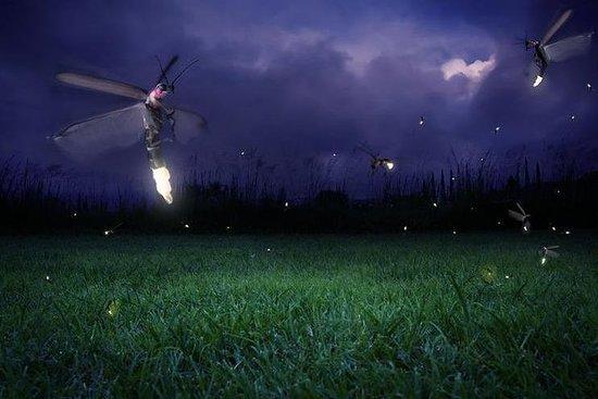 Glowing Kuala Selangor Firefly Tour