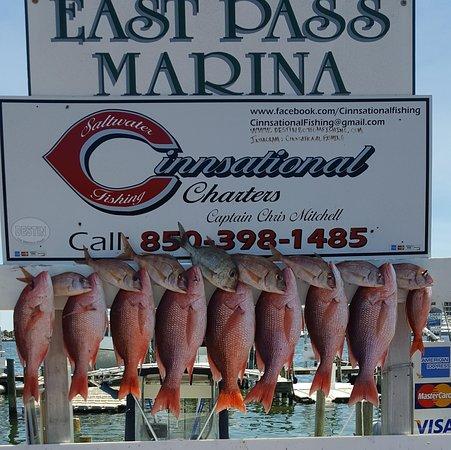 Cinnsational Saltwater Fishing