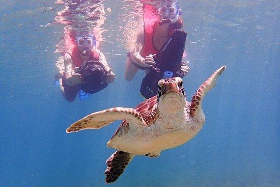 Aventure de plongée en apnée au...