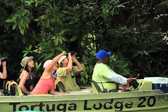 Tour pelos canais de Tortuguero