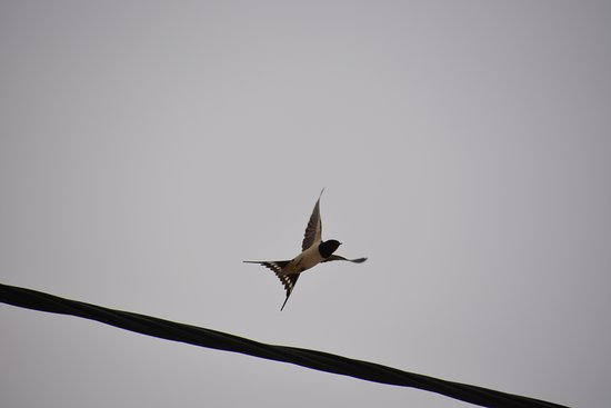 A swallow near the hotel