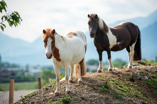 Horses at the Narzenhof