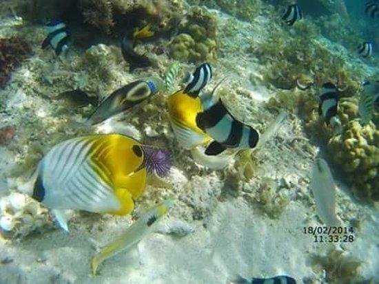 Ile Aux Cerfs: Bluebay marin park