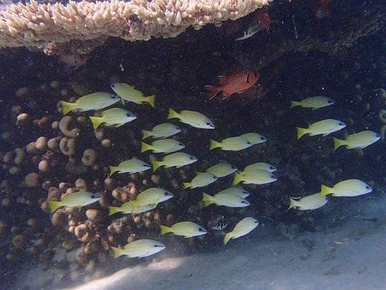 Ile Aux Cerfs: Snorkeling