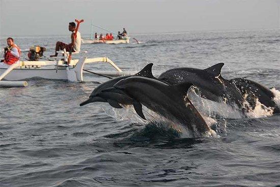 Excursão Lovina Dolphin and Jatiluwih