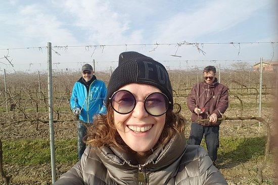 Beskæring med vinproducenten og...