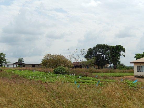 Port Loko, Sierra Leone: Farmer's field