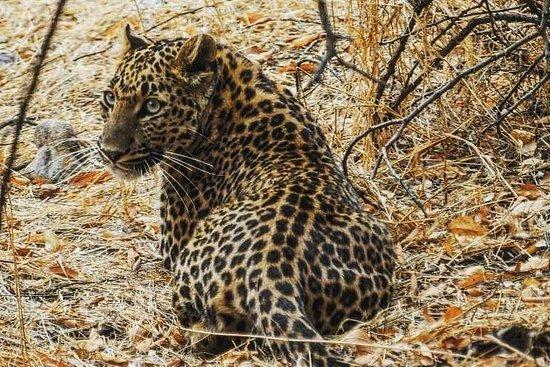 斋浦尔的贾拉拉豹豹Safari + Abhaneri阶梯井之旅,包括汽车和门票