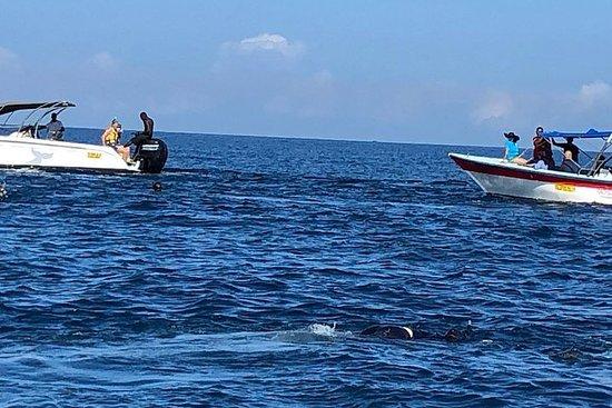 Visite l'Ouest de Maurice ( dauphins...