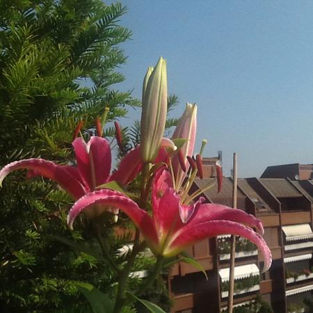 gpavoncello852 Avatar Ristorante oasi verde basiglio
