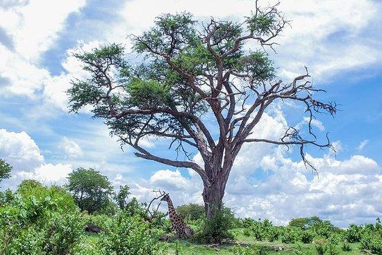 Revival Safaris and Tours