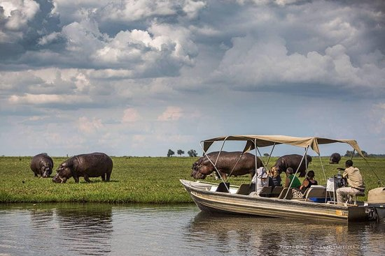 Revival Safaris and Tours
