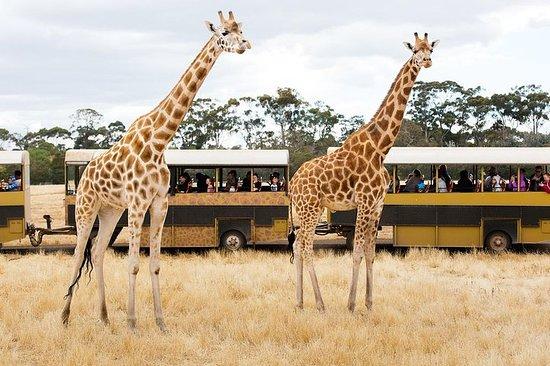 Billet d'admission générale au zoo de...