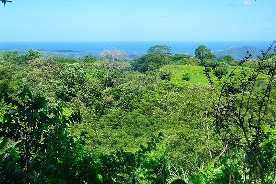 One Day walking trip in the mountains to an organic finca with mental...