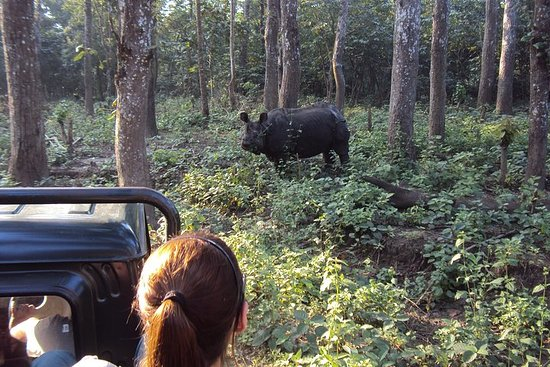 Valokuva: Mission Tiger Trek in Chitwan Nationak Park, 3 days hike