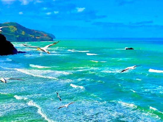Beautiful Pohutukawa Coast - Half Day Private Tour: .
