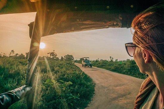Tarde Wilpattu National Park Safari...