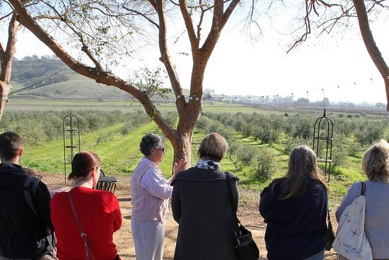 Guided Olive Mill Tour and Olive Oil Tasting with Food Pairings – fotografija