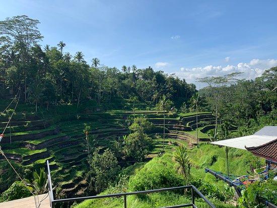 Ajer Bali Tours