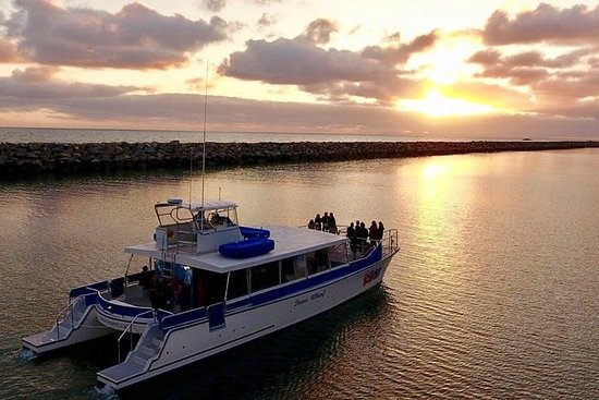 Luksus Catamaran Sunset og Wine Cruise fra Dana Point