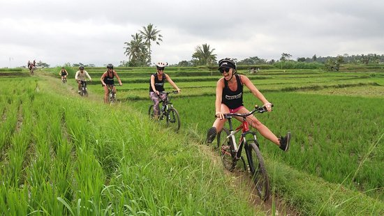 Taro, Indonesia: At the rice field