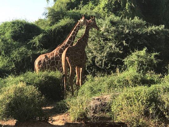 Национальный парк Малинди-Марине, Кения: Swara camp