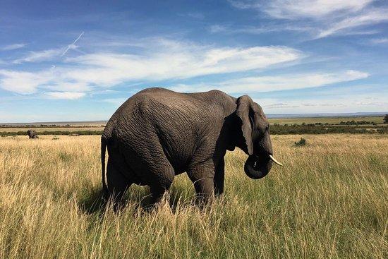 Mara North Conservancy Photo
