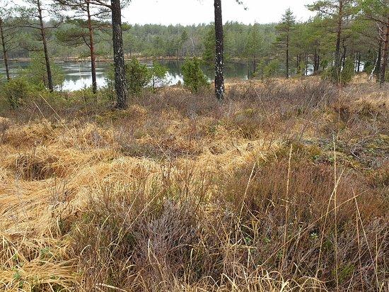Halden, Norveç: Fra Olavsleden ved Langevatnet