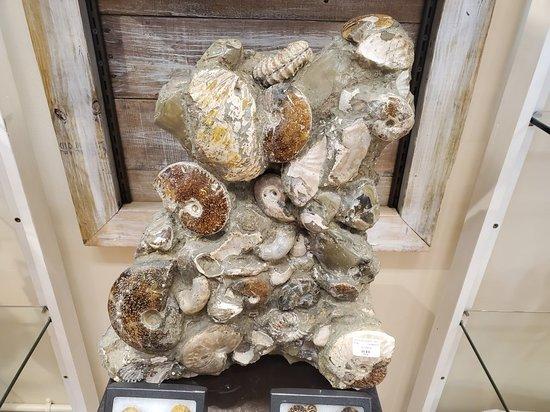 Prehistoric St. Augustine