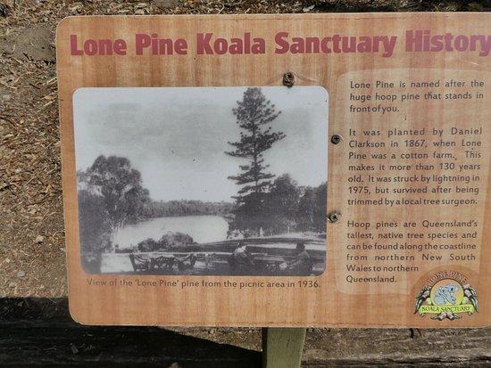 Lone Pine History