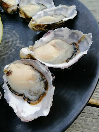 plump and juicy - freshly shucked
