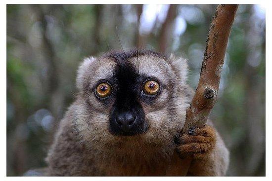 Wildlife Tour in Madagaskar 14D / 13N