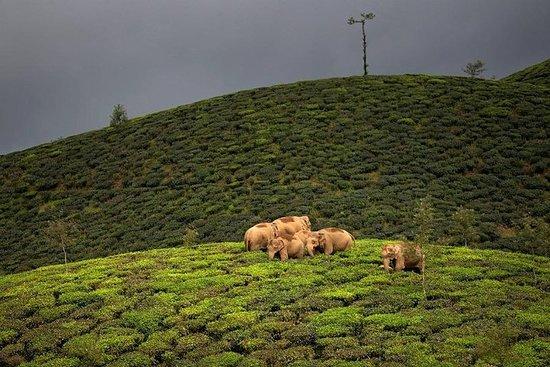 Adventurous Valparai trip from Kochi - 2 days trip