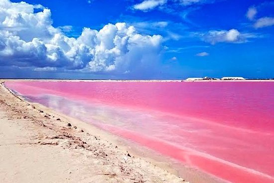 Tour Las Coloradas Con Transporte