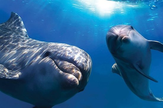 Visite avec observation des dauphins au départ d'Olbia