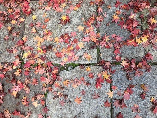 Ακόμα και τα πεσμένα φύλλα είναι εντυπωσιακά! Αυτά είναι απο κάποιο γιαπονέζικο είδος αν θυμάμαι καλά!
