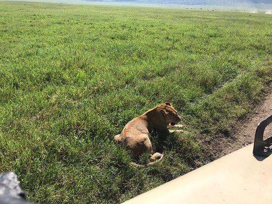 Ngorongoro Conservation Area Φωτογραφία