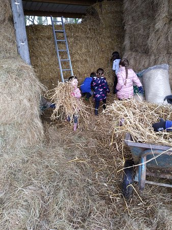Wittersham, UK: Helping to get fresh hay and straw after mucking out stables for the horses