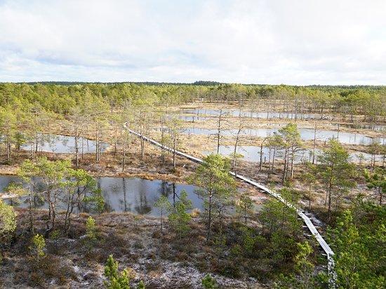 Kolga, Estland: Aussicht Viru raba vaatetorn