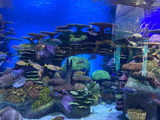 Oklahoma Aquarium (Jenks) - 2020 All You Need to Know ...