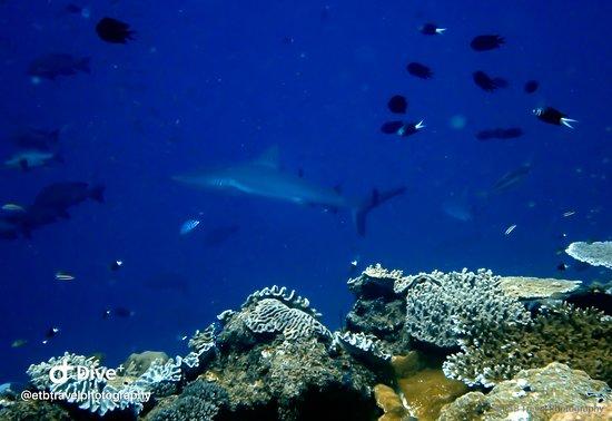 Munda, Quần đảo Solomon: shark point