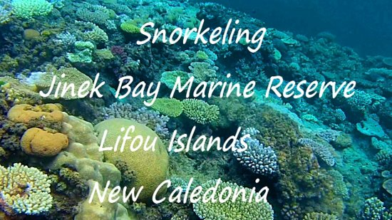 If your Sth. Pacific cruise takes you to Lifou Islands, make sure you snorkel Jinek Bay Marine Reserve. To see how wonderful the scenery is, watch my YouTube via link below. Snorkelling gear is available for hire near the jetty. Enjoy