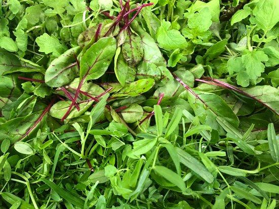 Jolie salade fleuri de léo