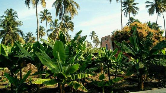Pedra Badejo, Cape Verde: Agência de Turismo e Serviços Cardoso Tours Sociedade Unipessoal lda.