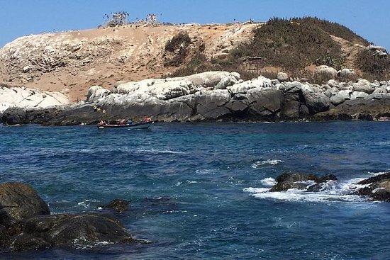 WalkingTour Zapallar-Cachagua HumboldtPenguins From Valparaiso...